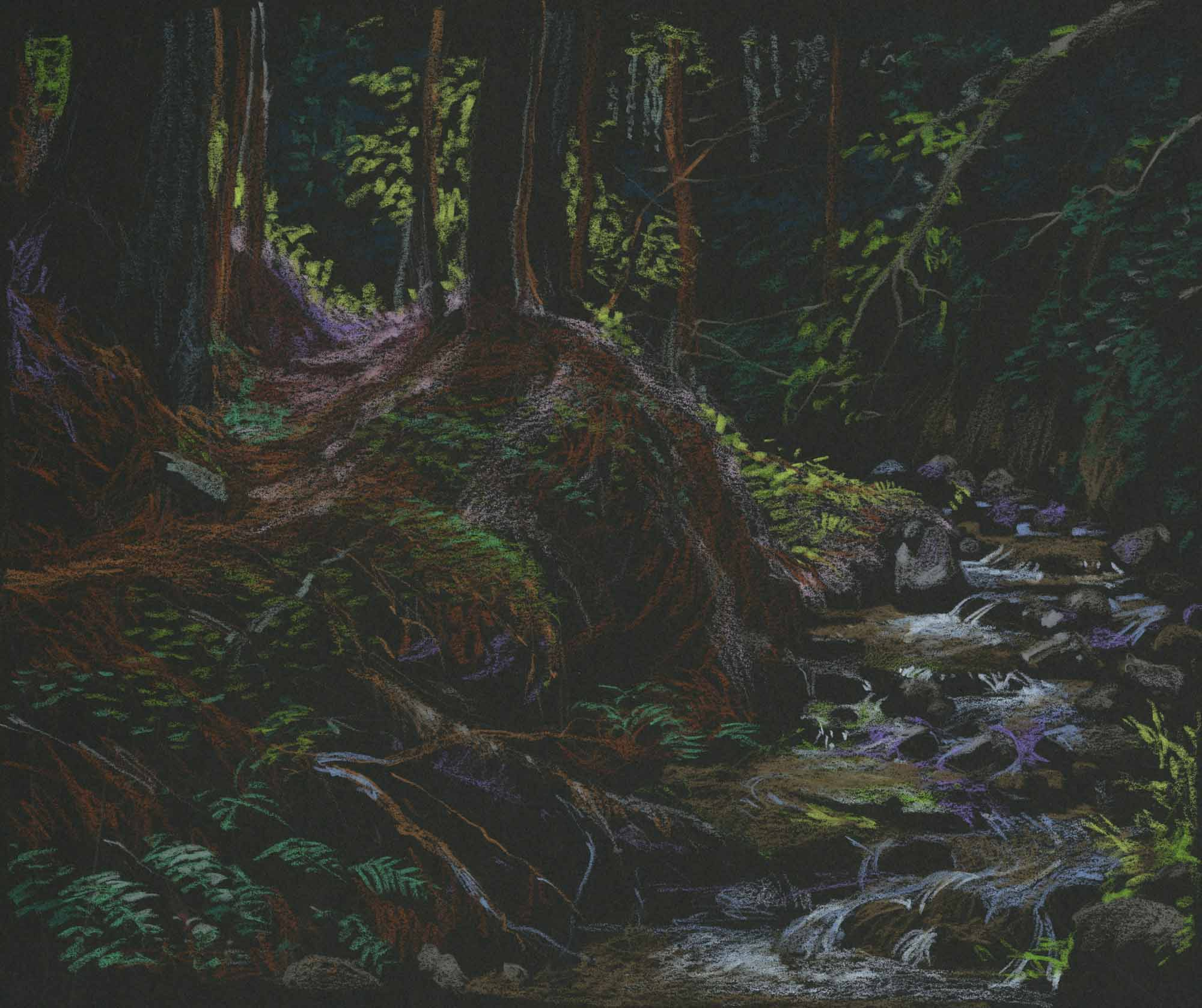 Redwood Stream